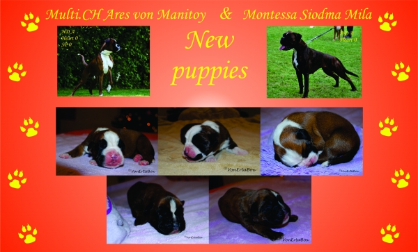 New puppies in Kennel Von Erta Box